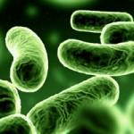 Бактериален простатит