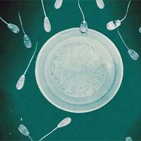 Безплодие (стерилитет)